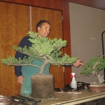 marcus_juniel_bonsai__3823-cvbs