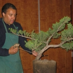 marcus_juniel_bonsai__3827-cvbs