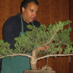 marcus_juniel_bonsai__3829-cvbs