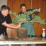 marcus_juniel_bonsai__3832-cvbs