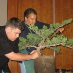 marcus_juniel_bonsai__3833-cvbs