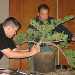 marcus_juniel_bonsai__3834-cvbs