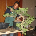 marcus_juniel_bonsai__3837-cvbs