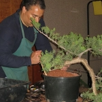 marcus_juniel_bonsai__3838-cvbs