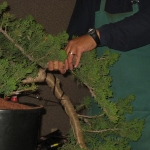 marcus_juniel_bonsai__3840-cvbs