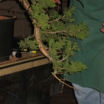 marcus_juniel_bonsai__3841-cvbs
