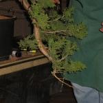 marcus_juniel_bonsai__3841-cvbs